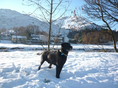 Morgan in the winter snow by Goldrill Beck